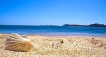spiaggia, mare, conchiglia