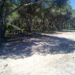 spiaggia di Orvile, pineta, amaca